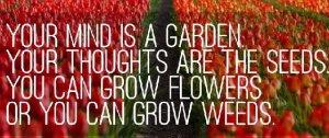 flowers-or-weeds